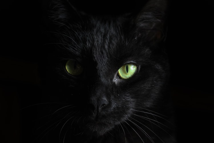 Are black cats lucky? This one was!